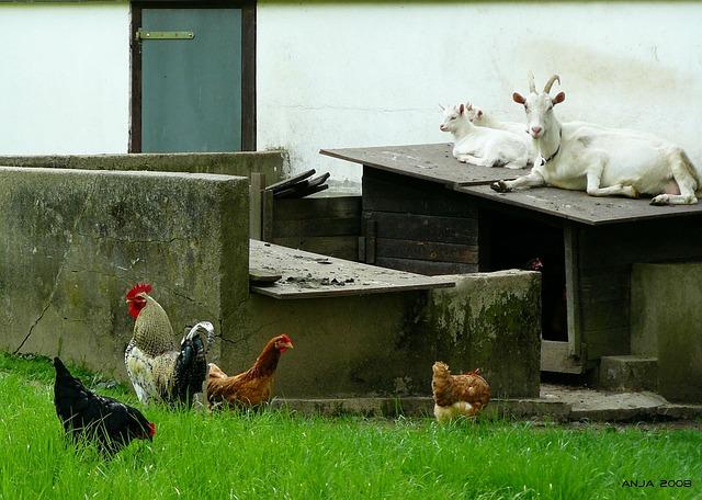 Dobra praksa: s sožitjem namesto s kemikalijami nad problem na kmetiji