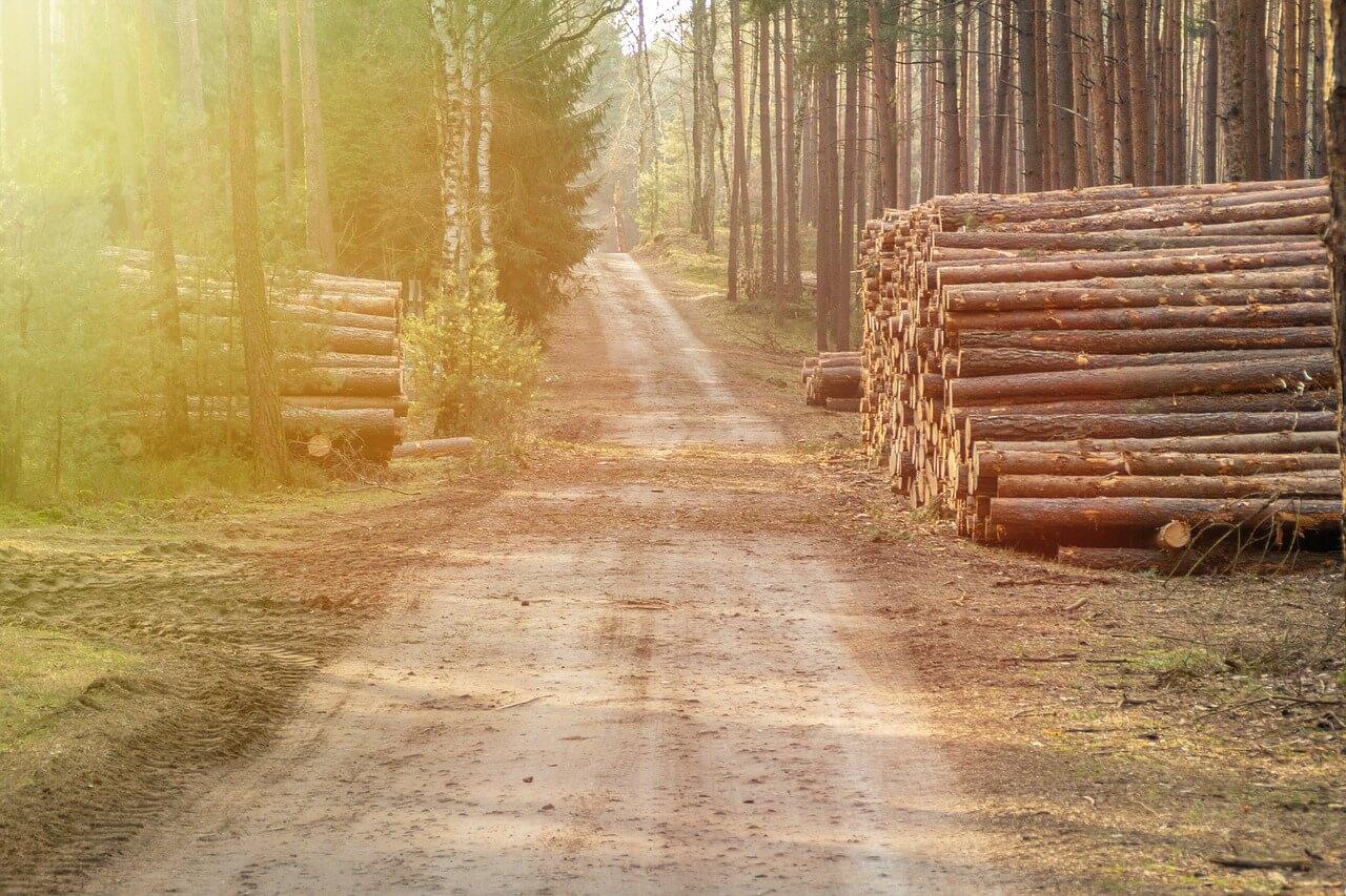 Ustanovitev SiDG je korak naprej pri oblikovanju gozdno-lesne verige