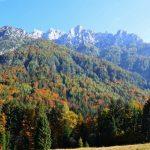 Varujemo gozdove – zdravi gozdovi za zdravo prihodnost