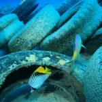 Avtomobilske pnevmatike glavni vir oceanske mikroplastike?